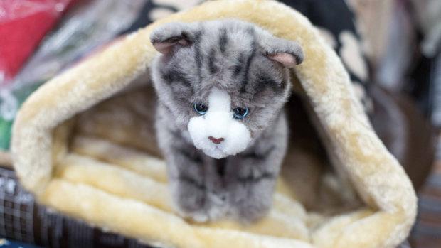 Popet Mascotas, todo para tu mascota tanto online como en tienda